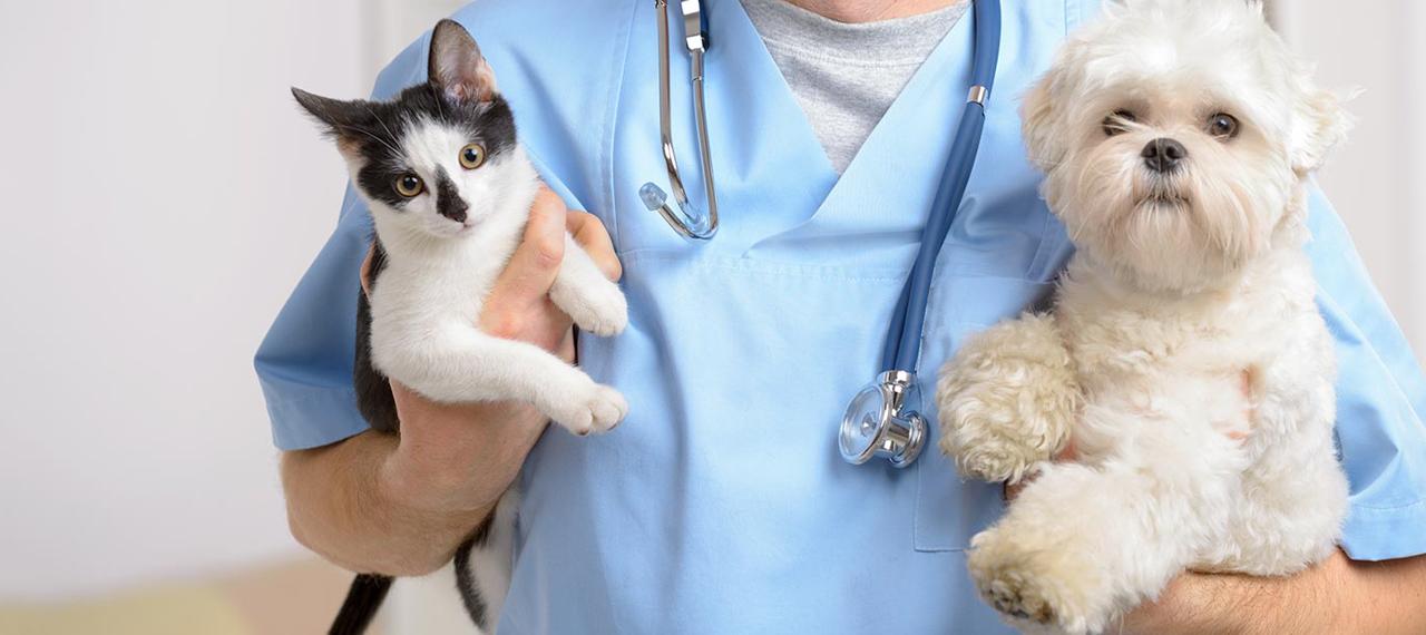 Картинки по запросу ветеринарная клиника