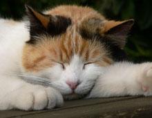 Кошка, которая больше спит в течение дня, может быть более беспокойной и активной ночью