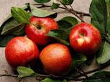 Некоторые фрукты, например, яблоки, необходимо очистить от кожуры перед тем, как дать кролику