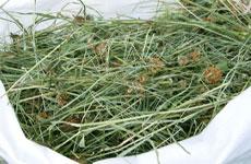Сено - основной источник питания кроликов, особенно в зимнее время!