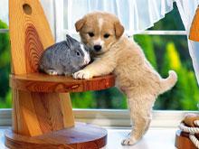 Кролики очень хорошо уживаются с другими домашними животными