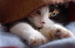 Во время действия наркоза животное может мерзнуть. Рекомендуется накрыть одеялом