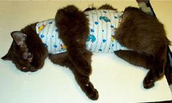 Послеоперационная попона для кошек