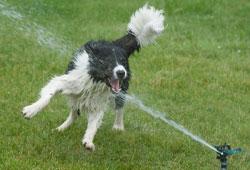 В жаркую погоду животным рекомендуется устраивать прохладный душ
