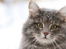 Усиливающиеся холода – серьезное испытание для организма животных, которое сопровождается снижением иммунитета