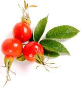 Шиповник - источник витамина C. Витамин C играет важную роль в профилактике и лечении различных инфекционных заболеваний