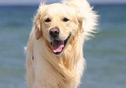 Сбалансированное кормление собаки очень важно для ее здоровья и способности к нормальной жизни и работе