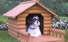 Летняя будка для собаки в загородном доме или на даче